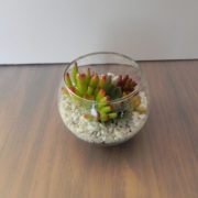 medium-sized-glass-bowl-with-plants-slightly-portruding-at-the-top