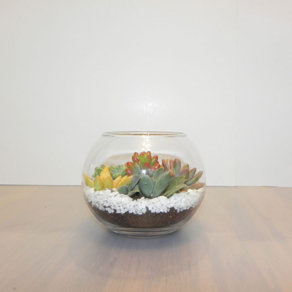 Succulent Arrangement In Medium Sized Terrarium Or Glass Bowl