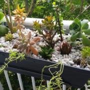 succulent-cactus-balcony-planter-1