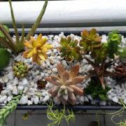 succulent-cactus-balcony-planter-2