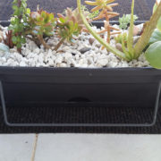 succulent cactus balcony planter pot box sydney